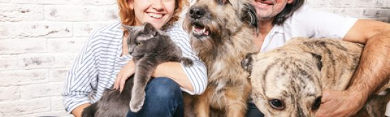 Importance of Wellness for your pets